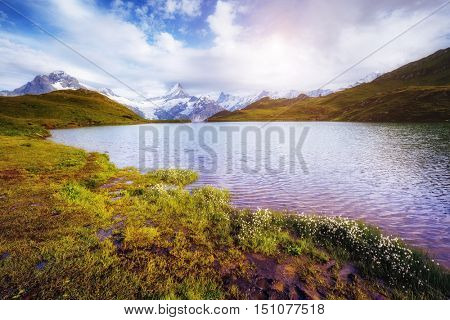Panorama of Mt. Schreckhorn and Wetterhorn above Bachalpsee lake. Idyllic and picturesque scene. Popular tourist attraction. Location Swiss alp, Bernese Oberland, Grindelwald, Europe. Beauty world.