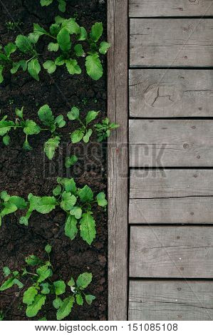Garden detail in aerial view with bark compost