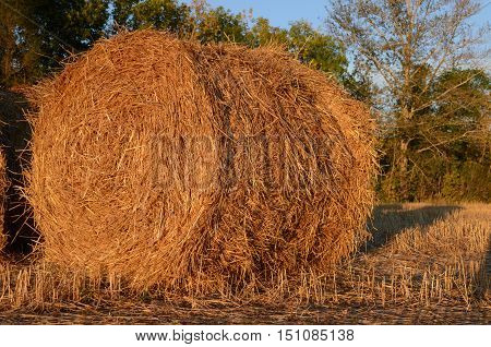 the round haystack lying in the fieldthe field of the cleaned wheat