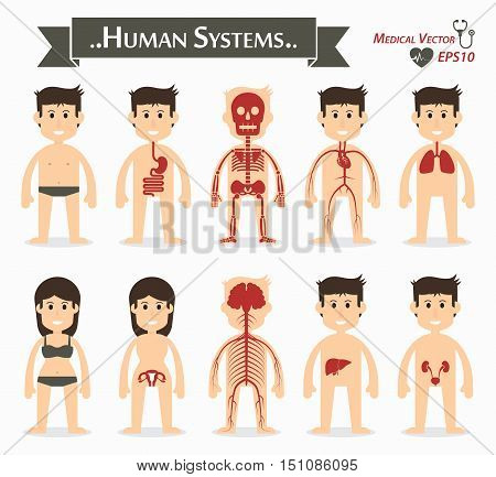 Human systems ( gastrointestinal or digestive , skeletal , cardiovascular or circulatory , respiratory , gynecological , neurological , hepatobiliary , genitourinary ) ( flat design )