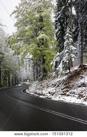 a asphalt road in forest after morning snowiang,