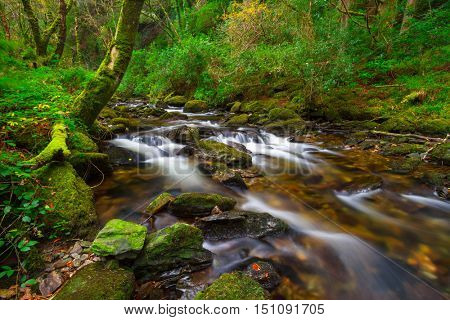 Irish creek of Clare Glens in Co. Limerick