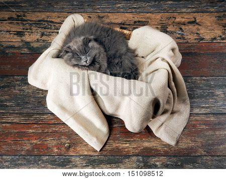 Gray fluffy kitten sleeps in a box on a rug. Old wooden floor. View from above