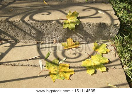 Maple autumn leaves lie on a ladder. On a ladder the shadow from a fence falls