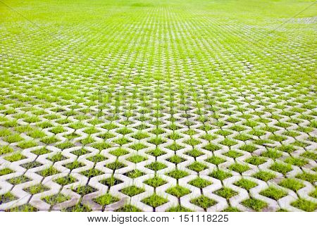 Eco-friendly parking of concrete cells and turf green grass