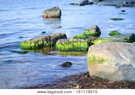 rocks in sea water covered with green algae
