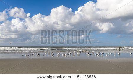 Flock Of Seagulls Standing On A Tropical Beach