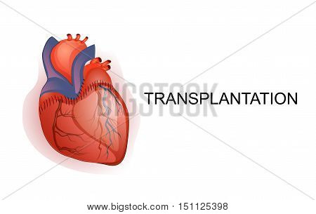 illustration of organ Transplantation. heart. body part