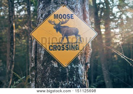 Moose Crossing Sign on a Road Tree