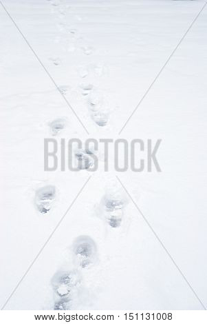shoe footprints in the snow at cold winter