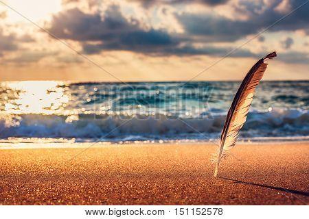 Beautiful Sunrise Over The Sea And Gull Feather Stuck Into The Sand Sea.