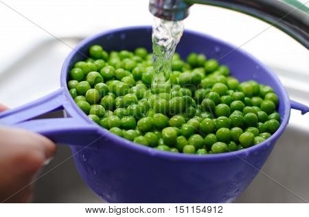 Housewife wash green peas in unning water in the kitchen