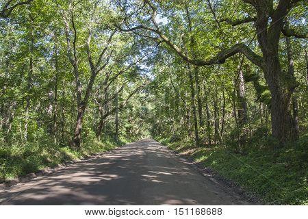 A scenic tree-lined road on Edisto Island SC