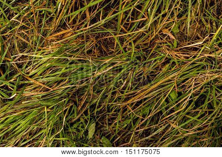 Grass, colors of fall, dry grass, photo grass, dried grass, autumn, autumn texture, autumn pattern, photo of dried grass, yellow, yellow grass, autumn background, hay, autumn time, green, fall background, natural background, nature at fall, grass text