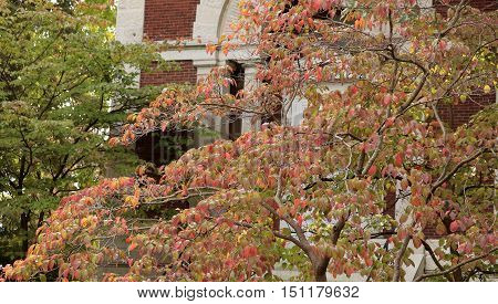 Dogwood tree growing in front of a building; autumn