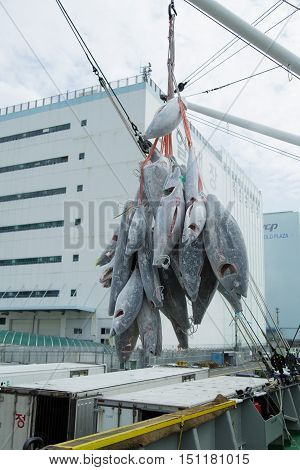 Busan South Korea - September 22th 2016: Busan fish port overload of a frozen tuna.