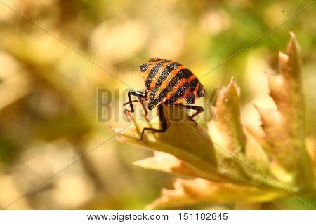 Nature, animals, insects, fauna, beetle, beetles, bark beetles, predators, diversity, summer