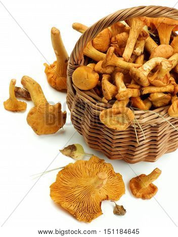 Wicker Basket Full of Fresh Raw Chanterelles with Dry Leafs Cross Section on White background