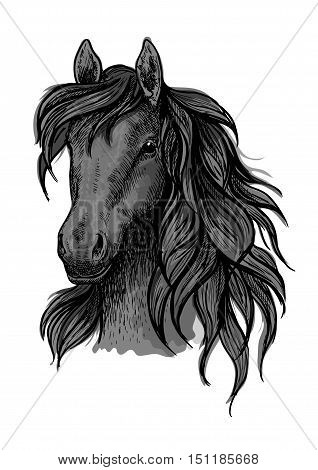 Black horse portrait. Stallion proudly looking down with long strands of wavy mane. Artistic vector sketch portrait