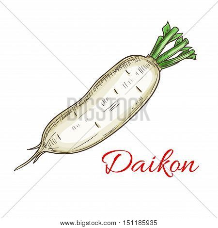 Daikon vegetable icon. Isolated daikon radish root. Vegetarian fresh food product sign for sticker, grocery shop, farm store element