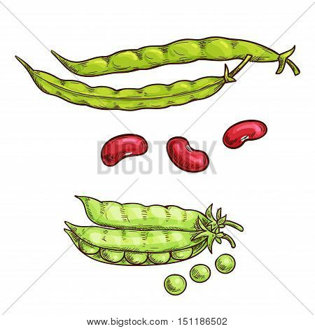 Green pea and bean vegetable sketch icons. Isolated open pea pod. Vegetarian fresh food product sign for sticker, grocery shop, farm store element