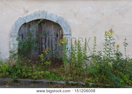 Entrance to the old wine cellar not used for a long time. High plants infront of the door.