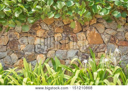 Natural Stone Wall And  Plants Texture Background