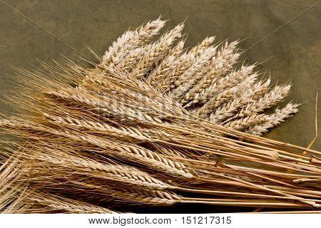 sheaf of wheat and barley on the dark desk