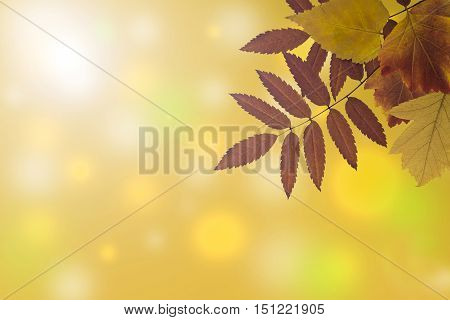 postcard with autumn leaves and blurry yellow background