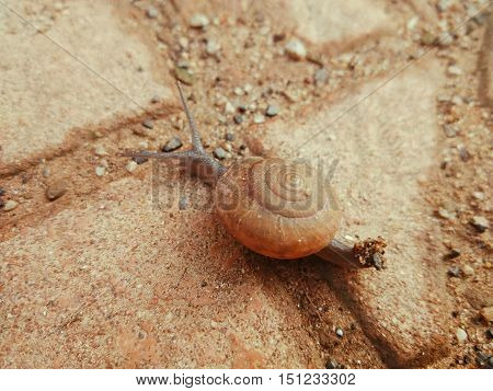 closeup shot of small brown snail crawling on brown concrete tile covered with pebbles