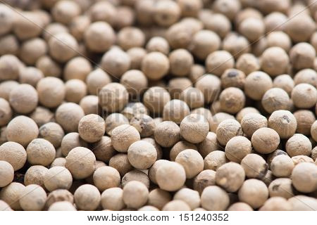 White pepper. White pepper background. close up of a background of white peppercorns.