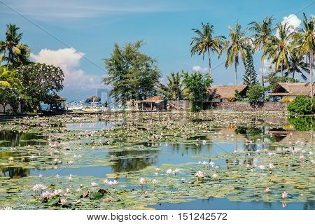 Beautiful Lotus Lagoon pond surrounded by tropical palmtrees nature in Candidasa, Bali. Travel to Indonesia, Asia.