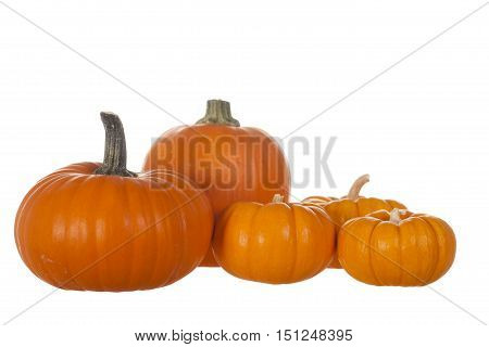 Five Pumpkin Decorative Display Isolated on White Background
