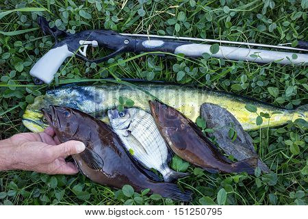 Fresh fish on the grass. Big Catch a variety of sea fish.