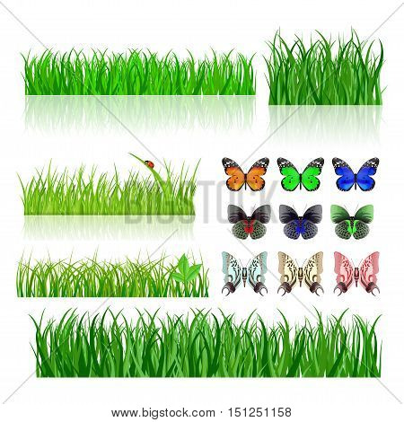 Green grass. Butterflies and ladybird. Vector illustration isolated on white background