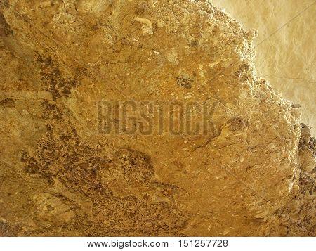 Fossils found in the rock formation in Rabat Malta