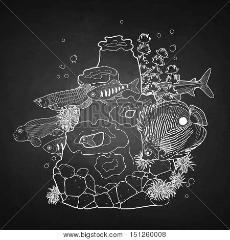 Graphic aquarium fish with coral reef drawn in line art style. Underwater scenery isolated on the chalkboard.