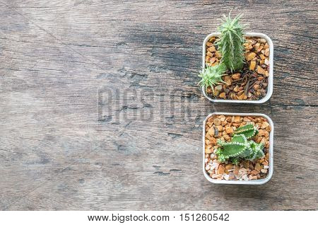 Closeup group of cactus in plastic white pot on wood desk textured background in top view with copy space