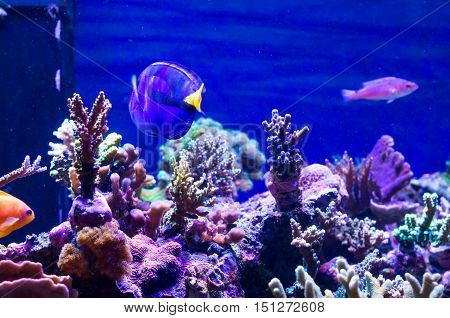 Marine aquarium: deep blue underwater scene with corals and fishes
