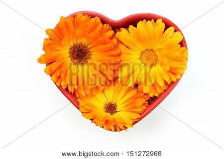 Calendula officinalis flower marigold. Group of blossom in heart bowl isolated on white background.