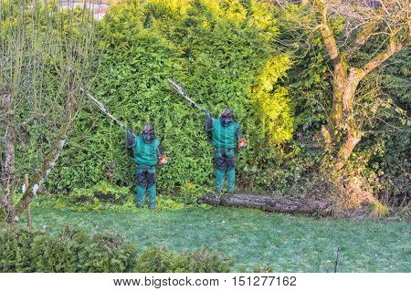 Cutting a hedge with a motor hedge trimmer.