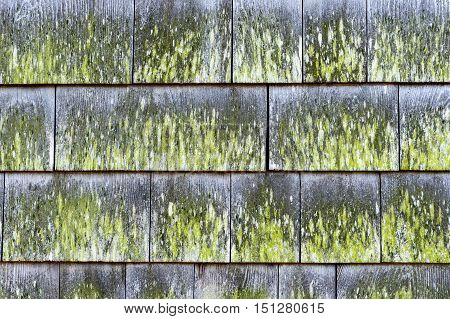 Siding shingles showing effects of exposure to elements