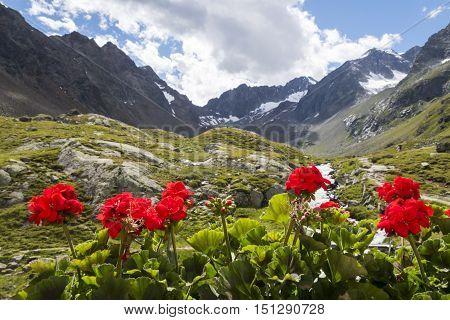 geranium flower in the alps in autumn
