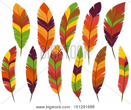 Thanksgiving or Fall Colored Turkey or Bird Feathers