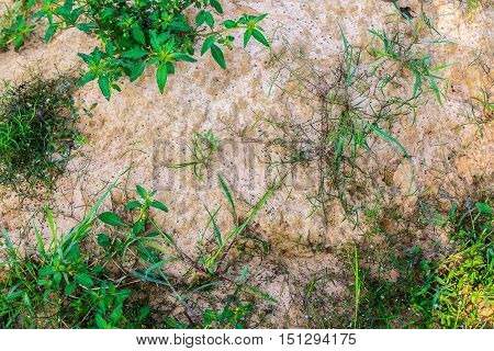 The grass plant on the ground texture.