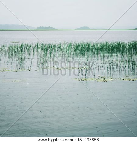 Cloudy Landscape Of The Lake With Water Sedge.