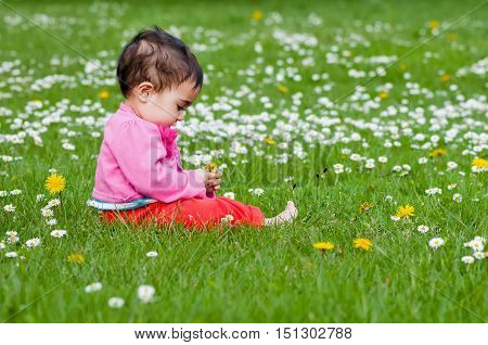 Cute chubby toddler looking at a daisy flower curiously exploring nature outdoors in the park