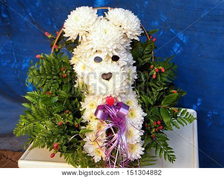 The bouquet of white chrysanthemums in the shape of a dog in Or Yehuda Israel