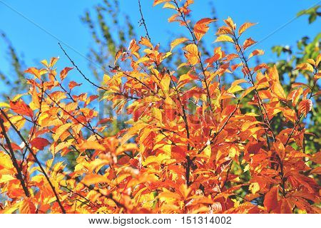 color full fall autumn background texture orange