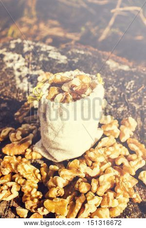 Outdoor food still life scene on a bag of walnuts on wood tree stump. Country nuts